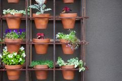 Garden Pots With Coleus Plants Stock Image Image Of