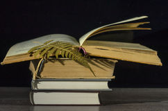 Many closed books .One open book. Royalty Free Stock Images