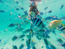 Many Clown fish with Diver taking photo underwater