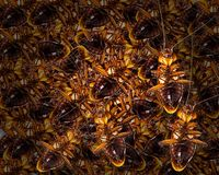 Many cockroaches die,Dead cockroaches nest ,Cockroaches die as a. Dense nest and last one cockroach walking,destroy royalty free stock photo