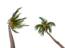 Many coconut palm trees on white Royalty Free Stock Photos