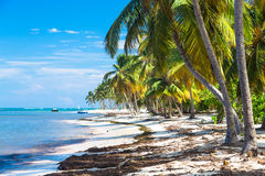 Many coconut palms on the wild carribean beach, Atlantic ocean, Dominican Republic Stock Images