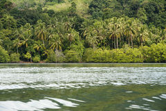 Many coconut trees along the beach. Adjacent to the green mountains Royalty Free Stock Image