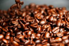 Many Coffee beans, makes you want to have a cup of coffee. Coffee beans, makes you want to have a cup of coffee Royalty Free Stock Images