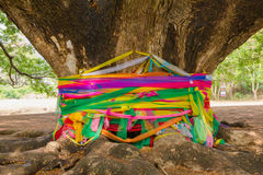 Many color fabric around tree is like holy thing Royalty Free Stock Images