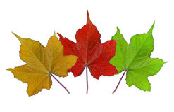 Many color of leaves Royalty Free Stock Image