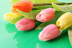 Many color tulips Stock Images