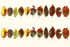 Many colored autumn sheets Royalty Free Stock Photos