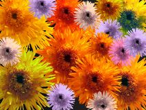 Many-colored flowers Royalty Free Stock Photo