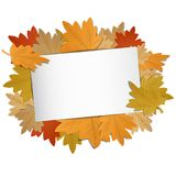 Many Colorful Autumn Leafes With Copyspace Inside. Vector Illustration On White Background Stock Image