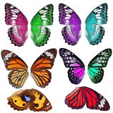 Many Colorful butterfly wing Royalty Free Stock Photography