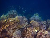 Many colorful coral Stock Photo