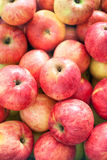 Many colorful fresh red apples Royalty Free Stock Photo