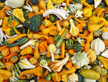 Many colorful gourds background Stock Photo