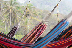 Many colorful hammocks hanging in front of coconut palm trees stock photography