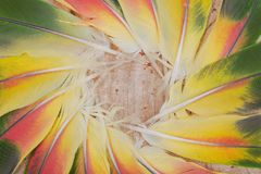 Many Colorful Parrot Feathers arranged in a circle. Like a flower royalty free stock photo