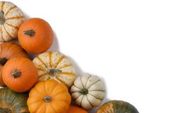 Many orange pumpkins. Many colorful pumpkins frame isolated on white background, autumn harvest , Halloween or Thanksgiving concept stock photos