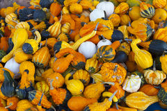 Many colorful pumpkins Stock Photo