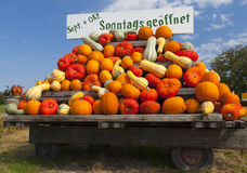 Many Colorful pumpkins on a tractor trailer Royalty Free Stock Photos