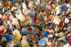Many of Colorful seashell as background Stock Photography