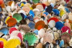 Many of Colorful seashell as background Royalty Free Stock Images