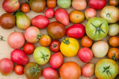 Many colorful tomatoes with different size Royalty Free Stock Images