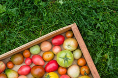 Many colorful tomatoes with different size background Stock Photos