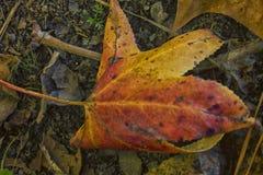 The Many Colors of Fall. `The Many Colors of Fall` is photo taken at Cooper Creek Park, located in Columbus, Georgia stock photos