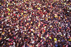 Many colors of fallen leaves Royalty Free Stock Photos