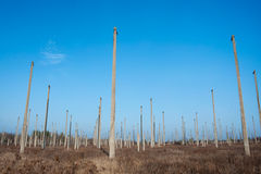 Many concrete poles standing in the field Royalty Free Stock Images