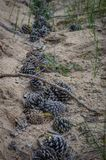 Many cones at the bottom of the dried bed of the stream. Summer drought after heavy spring rains royalty free stock photos