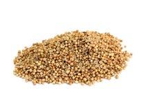 Many coriander seeds Royalty Free Stock Photo