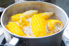 Many corn cobs boiling Stock Photography