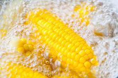Many corn cobs boiling Stock Photos