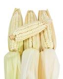 Many corn isolated on white background Royalty Free Stock Photo