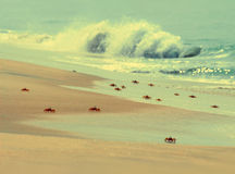 Many crabs on beach - vintage retro style Royalty Free Stock Images