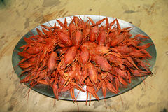 Many crawfishes. Red boiled crawfishes on the table in oval dish Stock Images