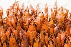 Many crawfishes Stock Image