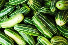 Many of cucumber in fresh market Stock Image