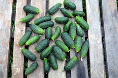 Many of cucumbers as background closeup Stock Photo