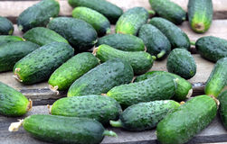 Many of cucumbers as background closeup Royalty Free Stock Image