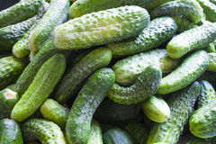 Many cucumbers closeup Royalty Free Stock Image