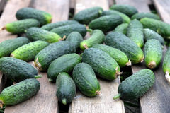 Many cucumbers on old wooden table outdoor top view Stock Images