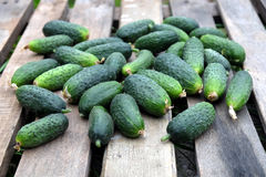 Many cucumbers on old wooden table outdoor top view Stock Photography