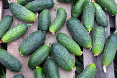 Many cucumbers on old wooden table outdoor top view Royalty Free Stock Photo