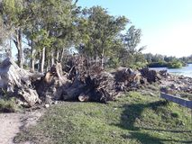 Devastated nature. Many cut trees on the ground royalty free stock photo