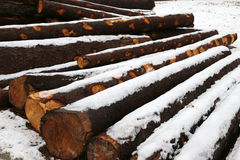 Many cut wooden logs in the winter under the snow Stock Photo