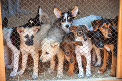 Many cute puppies locked in the cage Stock Images