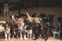 Many cute puppies locked in the cage Royalty Free Stock Photo
