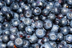 Many dark-blue blueberries Stock Images
